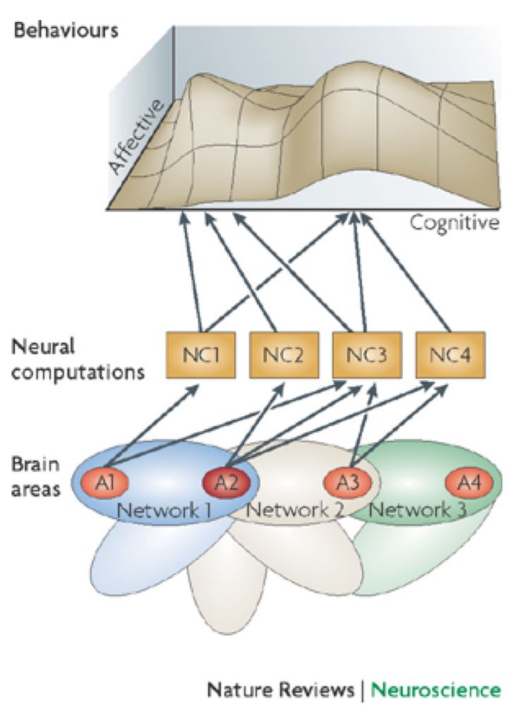Model displaying the interaciton between emotion and cognition in the brain and through behavior.